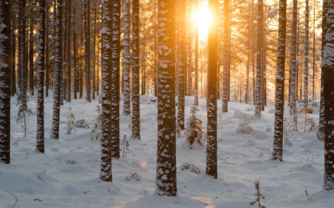 Metsävaratieto ja digitaalisuus metsäalalla