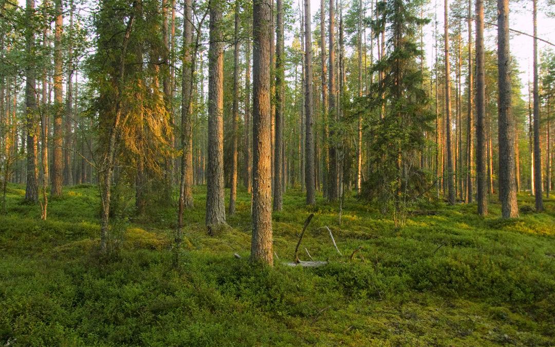 Metsän monta muotoa