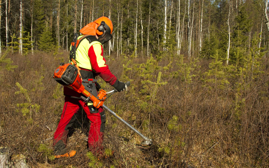 Hyvin hoidettu metsä ja metsäverotus
