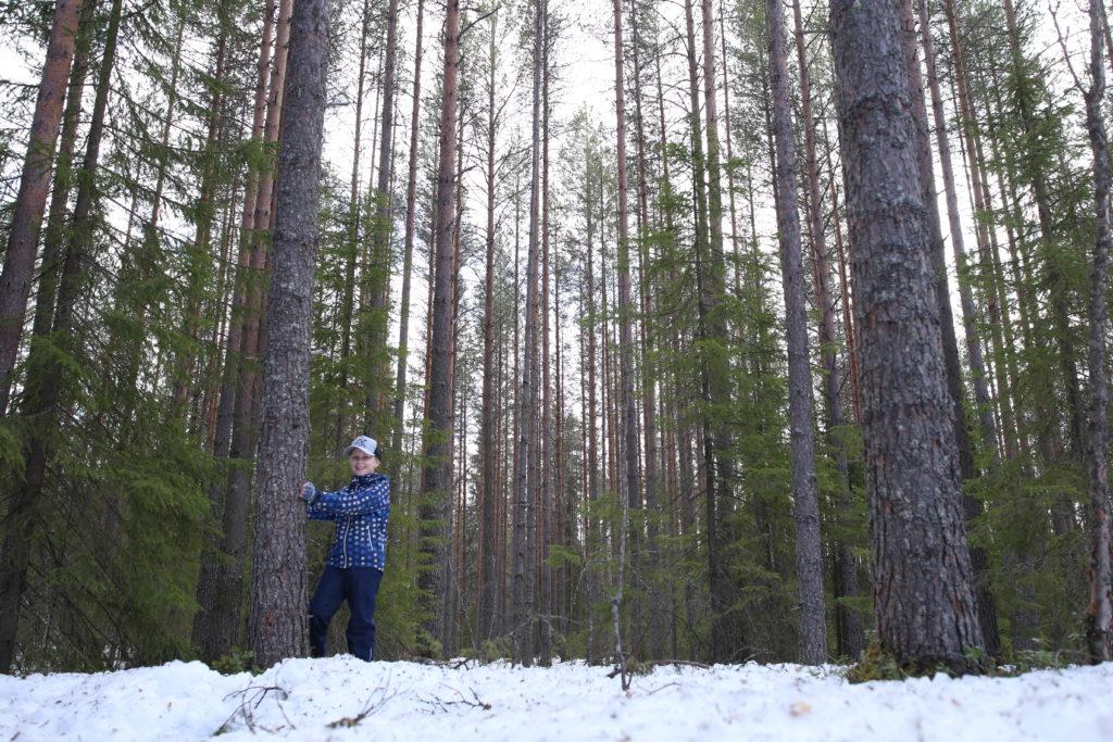 Harventamaton metsä
