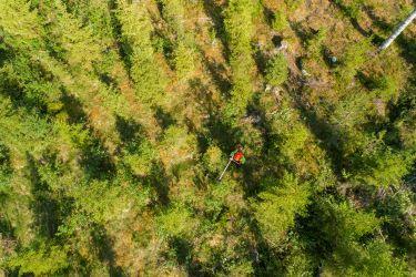 Metsäalan termistöä