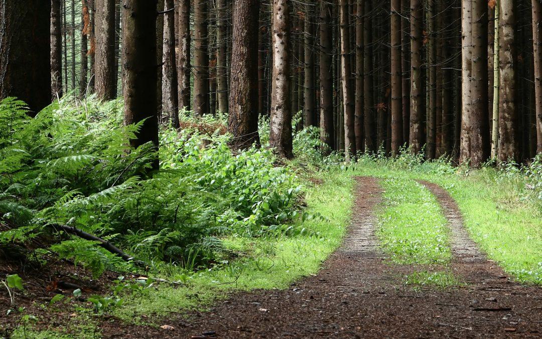 Tarinaa metsäbiotalouden ja yksityisteiden nykytilasta