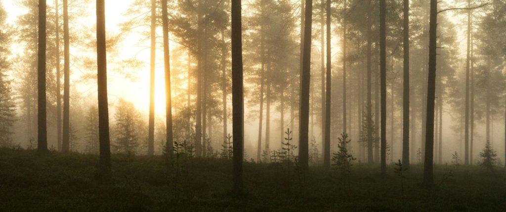 Metsätilakauppa