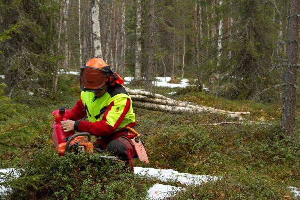 Metsäalalle työllistyminen ja alan mahdollisuudet