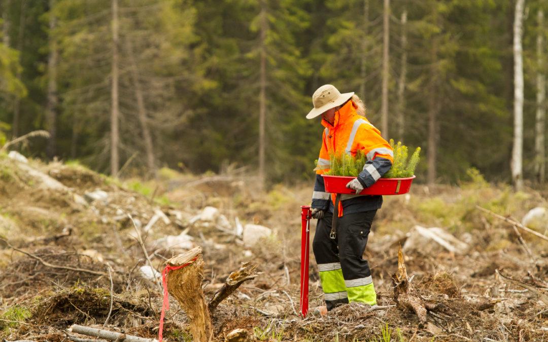 Miksi oikea-aikainen metsänhoito kannattaa?