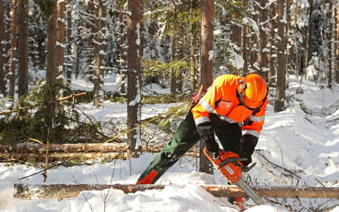 Metsähallitus arvostaa laadukasta työtä