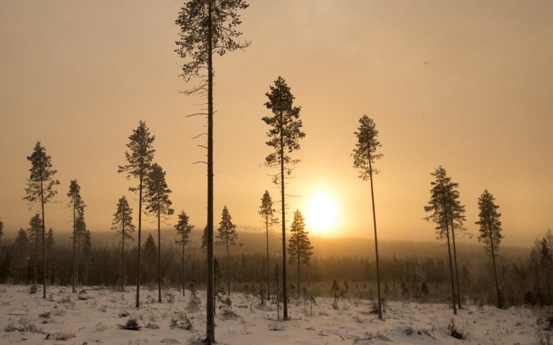 Millaiset metsätilat menevät parhaiten kaupaksi?